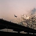 夕陽  老樹  噴射機