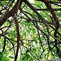 樹、枝、葉、光