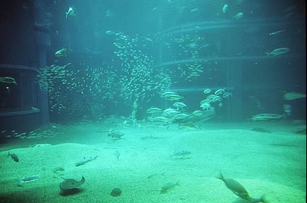 太平洋水槽