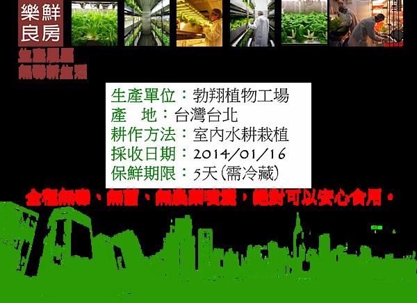 0116尖葉萵苣