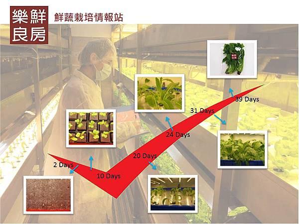 丸葉壬生菜