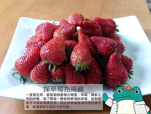 採草莓指南