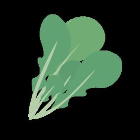 四季彩小白菜