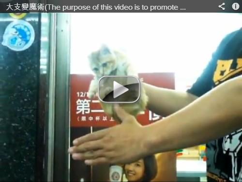 大支「空中抓貓」魔術,提倡領養寵物