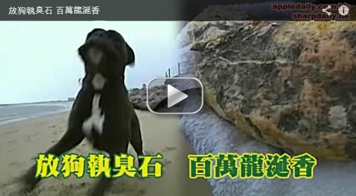 海邊溜狗撿到惡臭石,竟是珍貴龍涎香影片播放