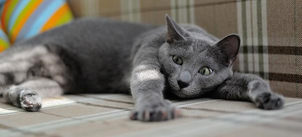 cat-1575265_1920.jpg