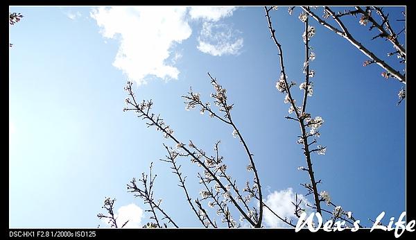 nEO_IMG_DSC04281.jpg