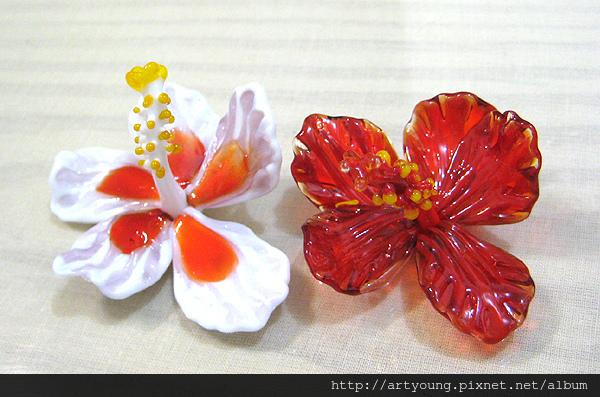 紅色朱槿與白色朱槿