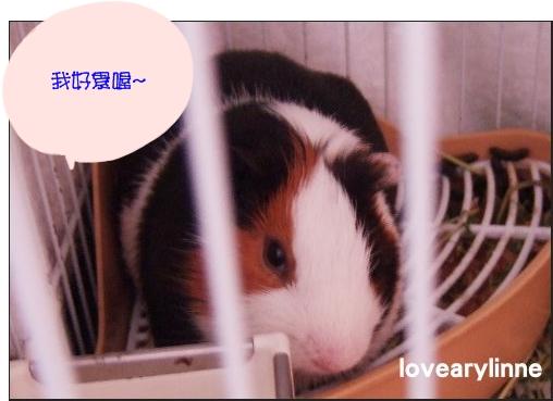 NINI-98.12.16.jpg
