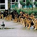 cat_dog.jpg