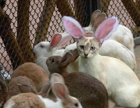 兔貓.jpg