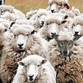 披著羊皮的狼.jpg