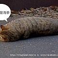 貓貓蟲.jpg