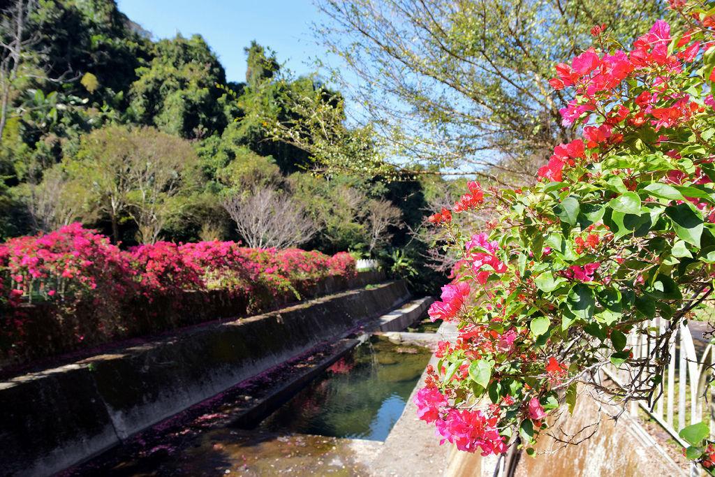 岩川森林民宿7537.jpg