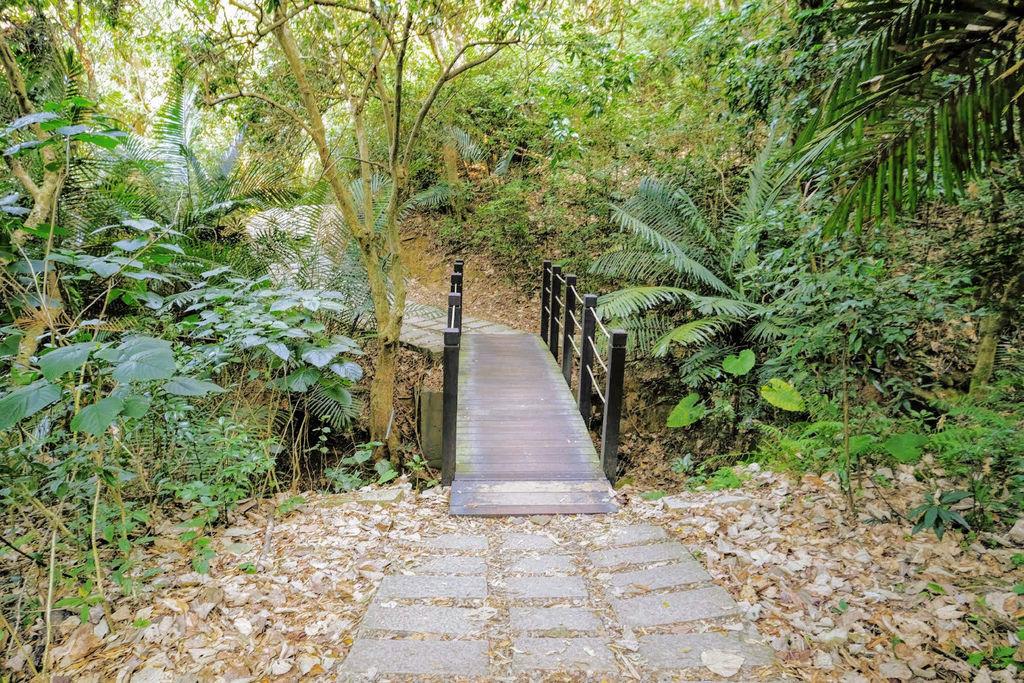 大坑登山步道4777.jpg