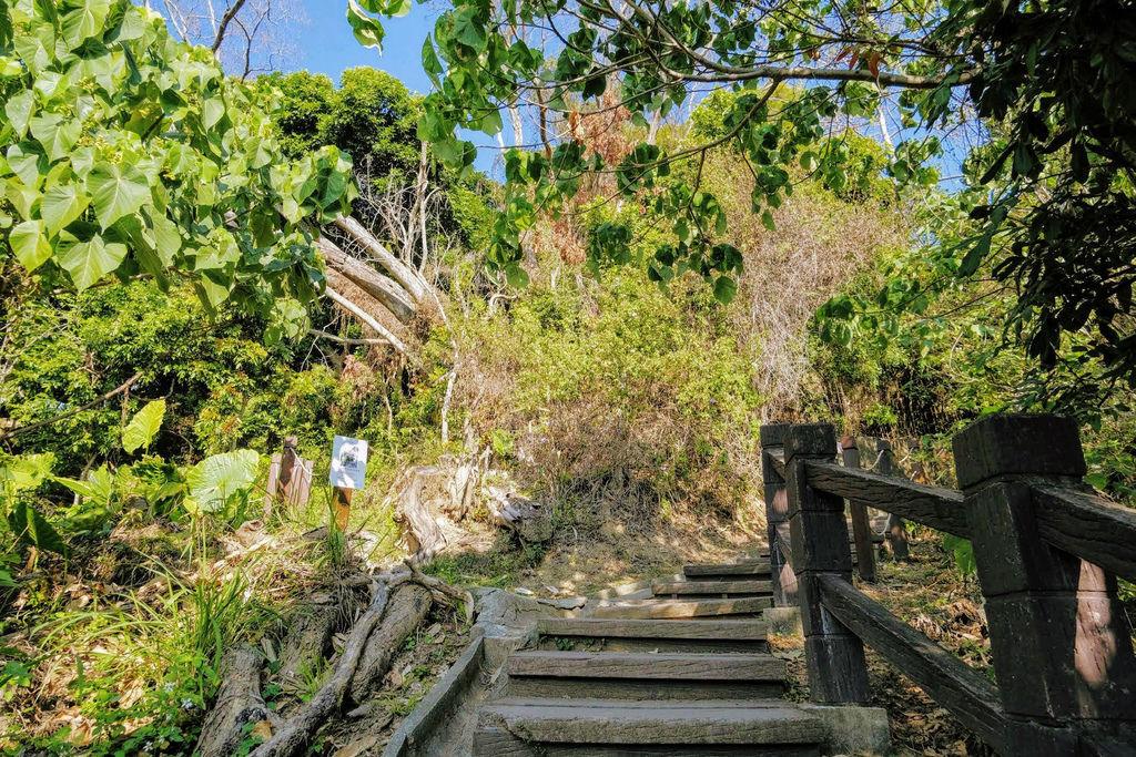 大坑登山步道4803.jpg