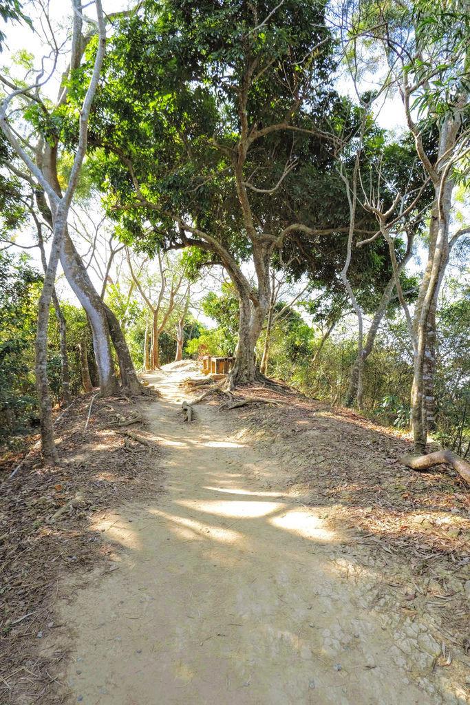 大坑登山步道4878.jpg