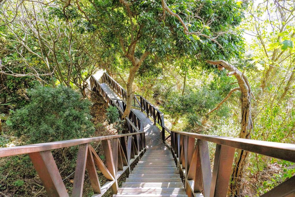 大坑登山步道4925.jpg