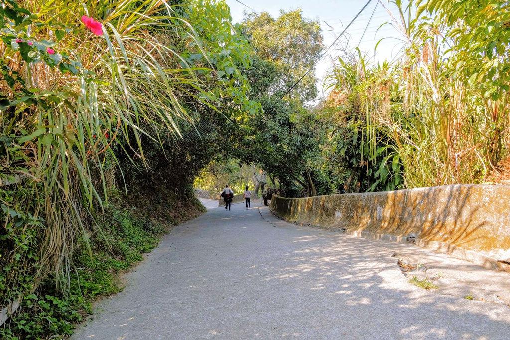 大坑登山步道4938.jpg