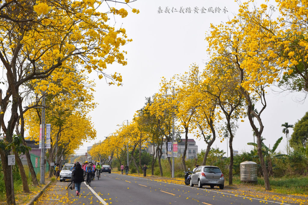 嘉義仁義路黃金風鈴木_7997.jpg