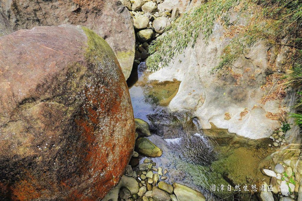 圓潭自然生態園區_DSF8175.jpg