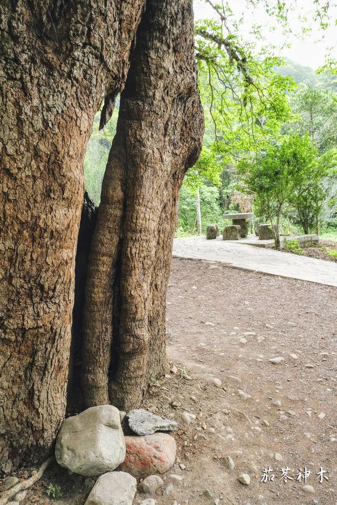 茄苳神木8686.jpg