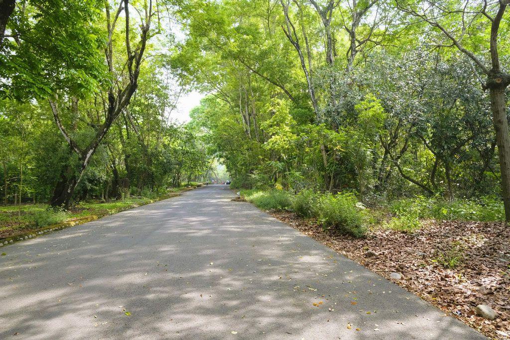 九九峰森林步道_DSF9055.jpg