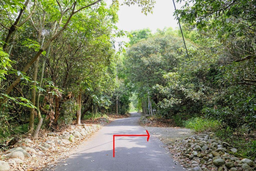 九九峰森林步道_DSF9080.jpg