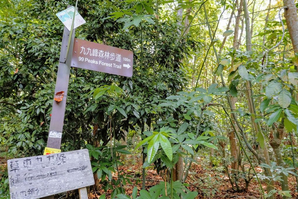 九九峰森林步道_DSF9086.jpg