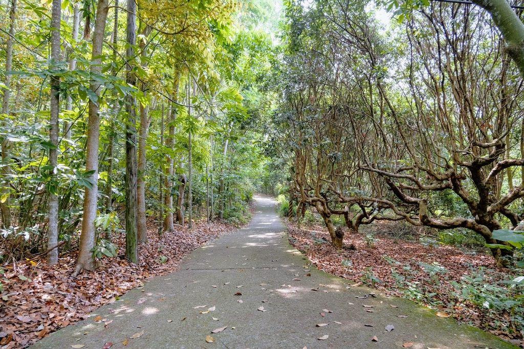 九九峰森林步道_DSF9090.jpg