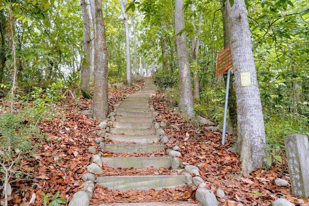 九九峰森林步道_DSF9121.jpg