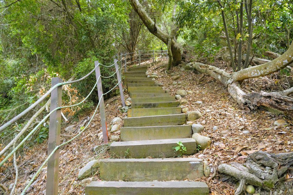 九九峰森林步道_DSF9160.jpg