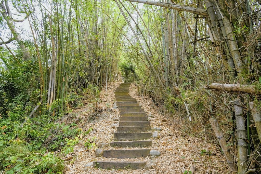 九九峰森林步道_DSF9169.jpg