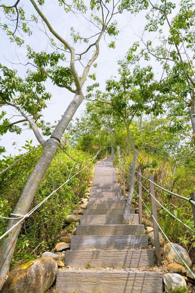 九九峰森林步道_DSF9203.jpg