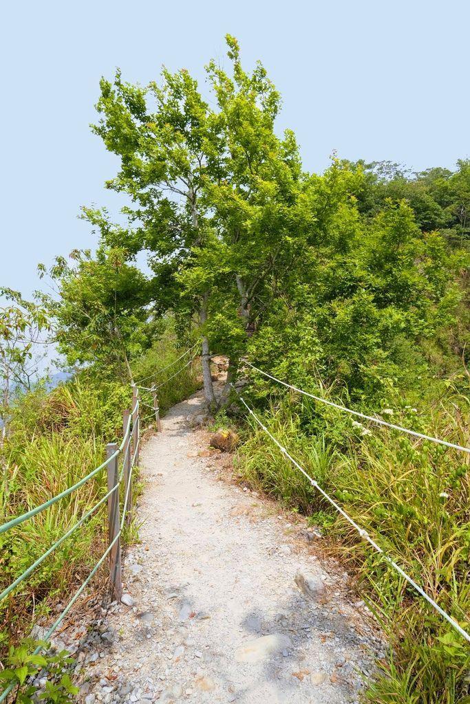九九峰森林步道_DSF9221.jpg