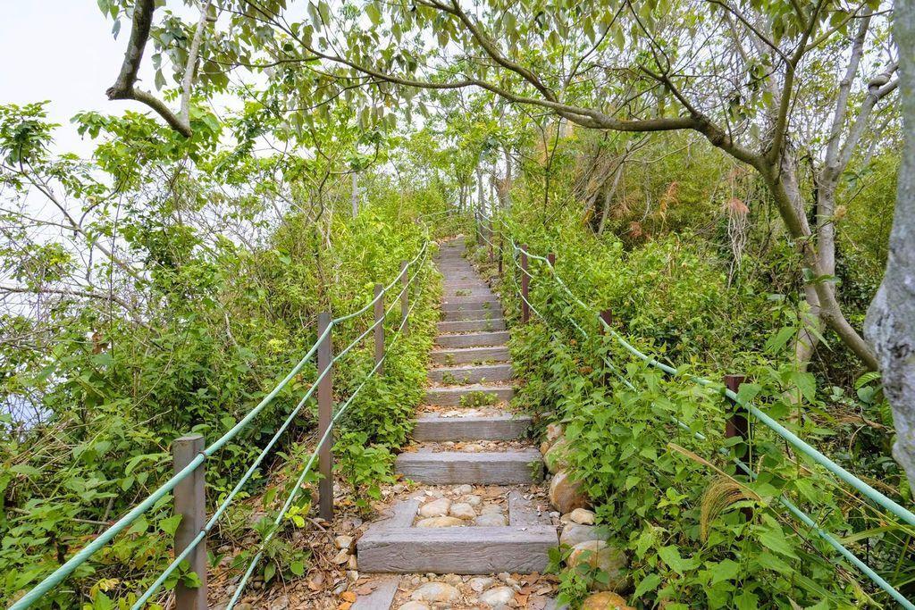 九九峰森林步道_DSF9260.jpg