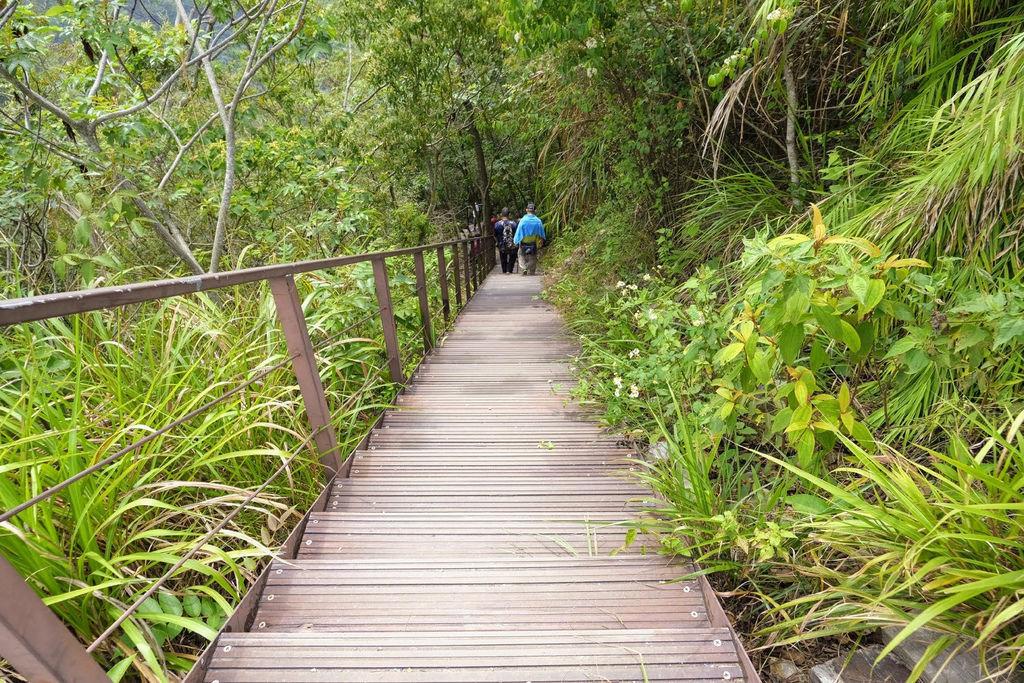 九九峰森林步道_DSF9298.jpg
