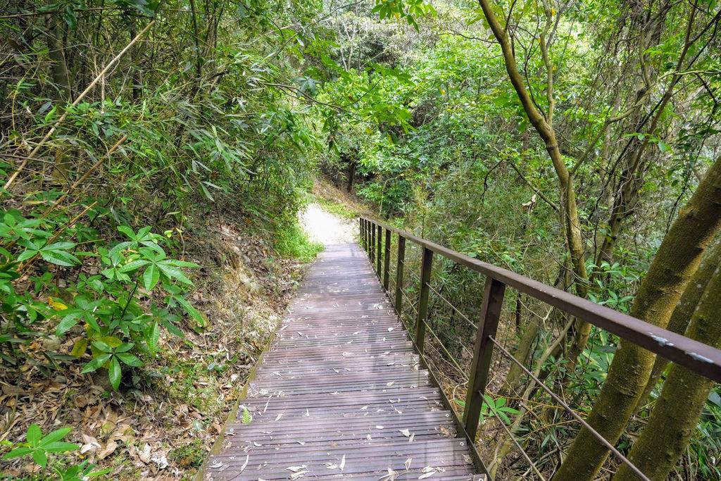 九九峰森林步道_DSF9301.jpg