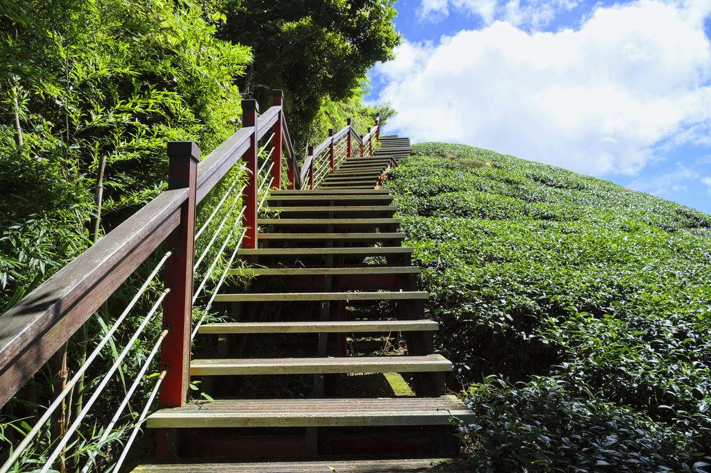 二尖山步道_DSF1796.jpg