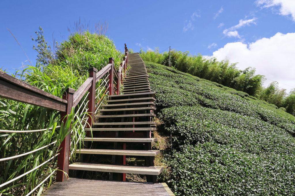 二尖山步道_DSF1862.jpg
