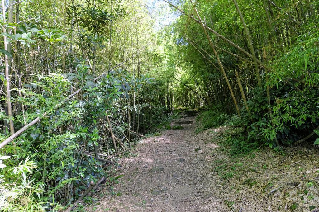 二尖山步道_DSF1898.jpg