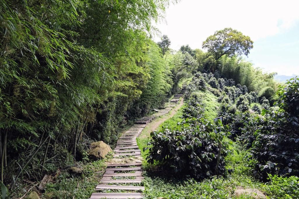 二尖山步道_DSF1921.jpg