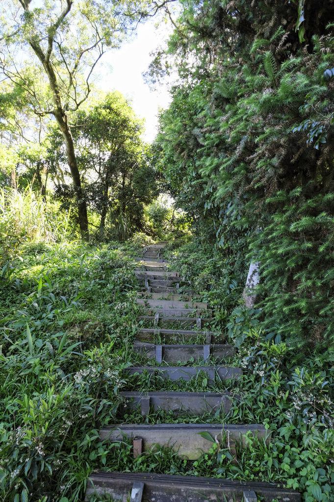 二尖山步道_DSF1943.jpg