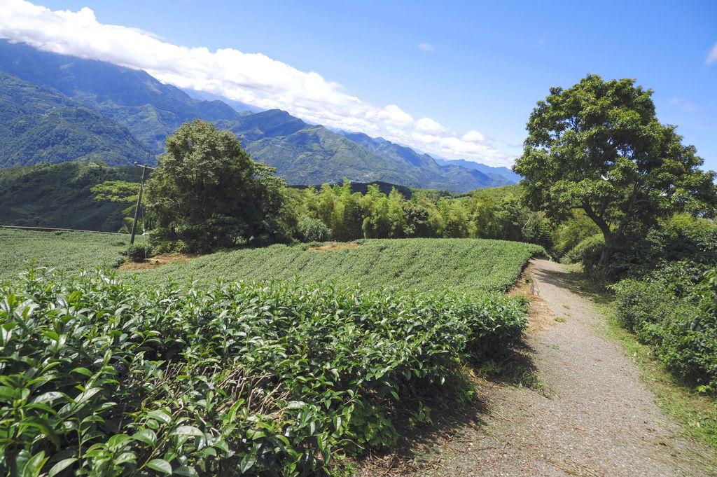 二尖山步道_DSF1952.jpg