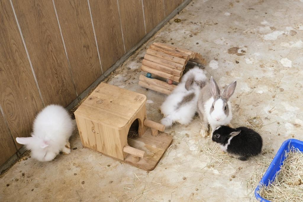 三隻小豬觀光農場_DSF5174.jpg