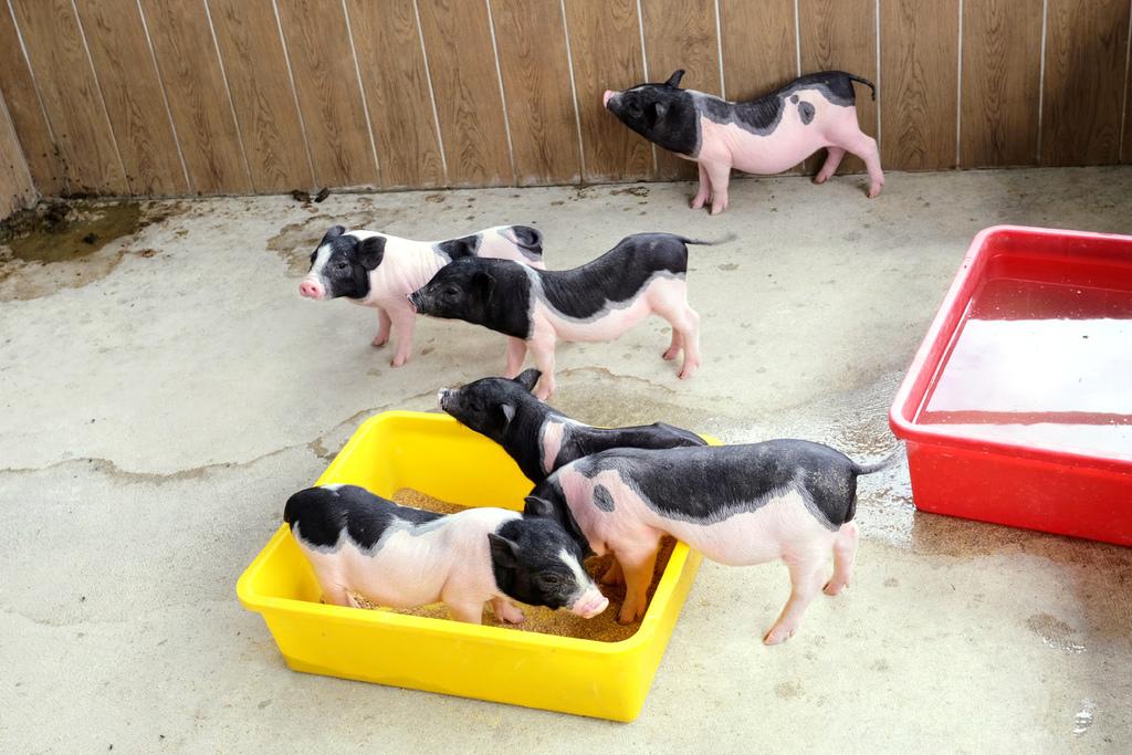 三隻小豬觀光農場_5181.jpg