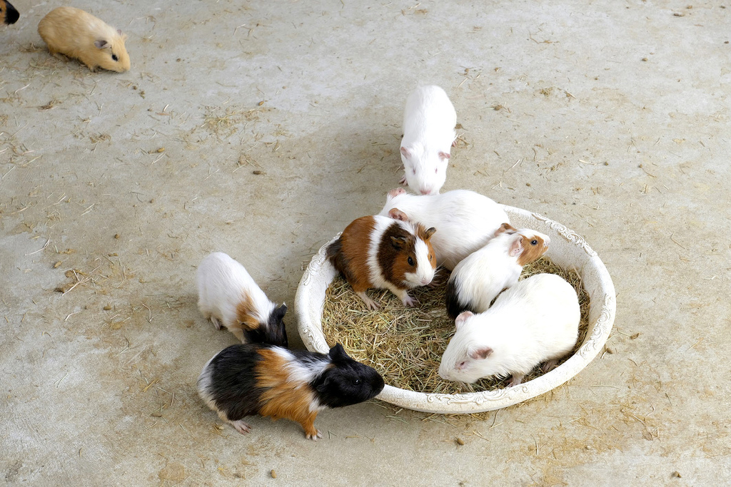 三隻小豬觀光農場_5179.jpg