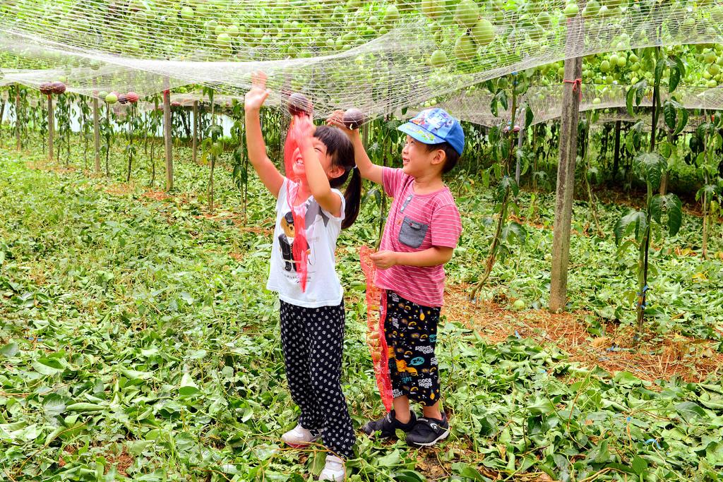 桃米休閒農業區004658.jpg