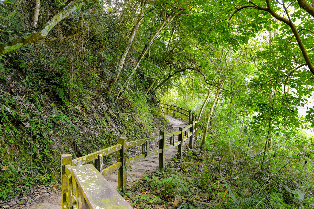 竹坑溪步道_DSC8438.jpg