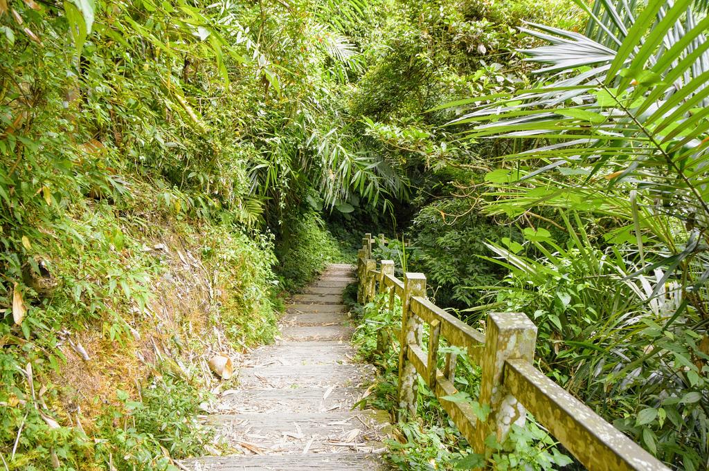 竹坑溪步道_DSC8509.jpg